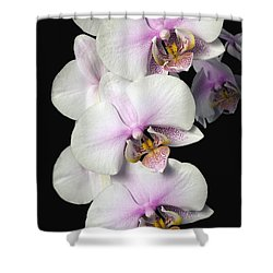 Orchids Shower Curtain by David Chapman