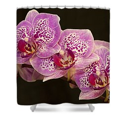 Orchids Shower Curtain by Eunice Gibb