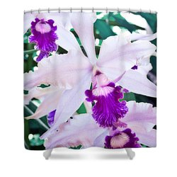 Shower Curtain featuring the photograph Orchids White And Purple by Steven Sparks