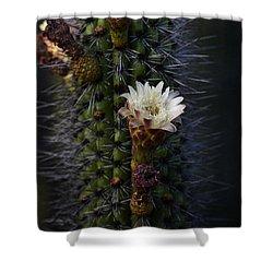 Organ Pipe Cactus  Shower Curtain by Saija  Lehtonen