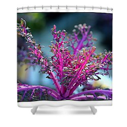Shower Curtain featuring the photograph Ornamental Cabbage by Judi Bagwell