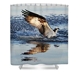 Osprey Crashing The Water Shower Curtain by Bill Cannon