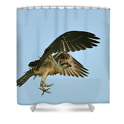 Shower Curtain featuring the photograph Osprey In Flight by Rick Frost