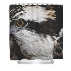 Shower Curtain featuring the photograph Osprey by Lydia Holly