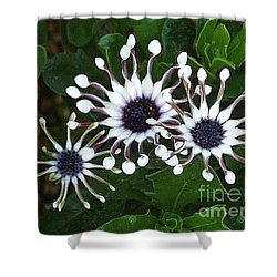 Shower Curtain featuring the photograph Osteospermum by Katy Mei