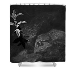 Out Of The Water Comes Shadows Bw Shower Curtain by Karol Livote
