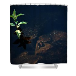 Out Of The Water Comes Shadows Shower Curtain by Karol Livote