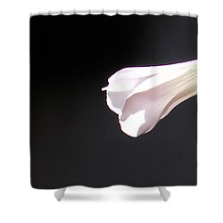 Oxalis Bud Shower Curtain by Kume Bryant