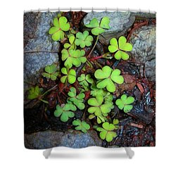 Oxalis Shower Curtain by Judi Bagwell