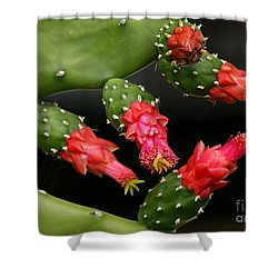 Paddle Cactus Flowers Shower Curtain by Sabrina L Ryan