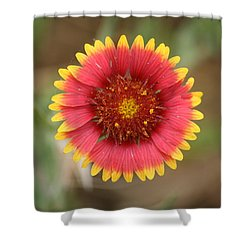 Painted Blanket Flower Shower Curtain