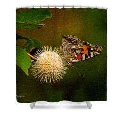 Shower Curtain featuring the photograph Painted Lady Impasto by Travis Burgess