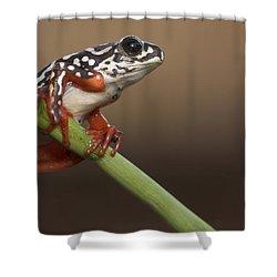 Painted Reed Frog Botswana Shower Curtain by Piotr Naskrecki