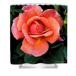 Painted Rose Shower Curtain by Cindy Manero