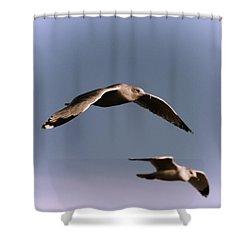 Pair Of Gulls Shower Curtain by Karol Livote