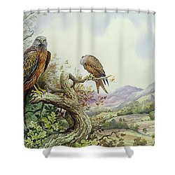 Pair Of Red Kites In An Oak Tree Shower Curtain by Carl Donner