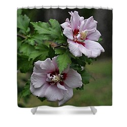Pair Of Rose Of Sharon Shower Curtain by Rick Friedle