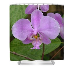 Pale Pink Orchid Shower Curtain