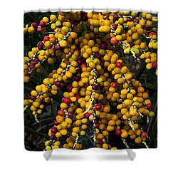 Shower Curtain featuring the photograph Palm Seeds Baroque by Steven Sparks