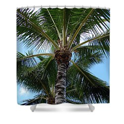 Shower Curtain featuring the photograph Palm Tree Umbrella by Athena Mckinzie