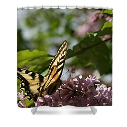 Papilio Glaucus   Eastern Tiger Swallowtail  Shower Curtain by Sharon Mau