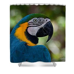 Shower Curtain featuring the photograph Parrot Head by Art Whitton