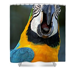 Parrot Squawking Shower Curtain by Carolyn Marshall