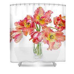 Parrot Tulips In A Glass Vase Shower Curtain by Ann Garrett
