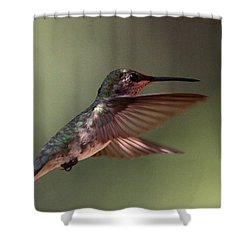 Partial Shade For The Ruby- Throated Hummingbird Shower Curtain by Travis Truelove