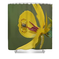 Partridge Pea And Matching Crab Spider With Prey Shower Curtain