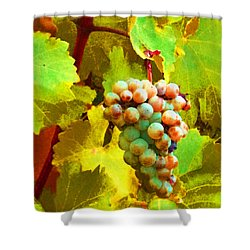 Paschke Grapes Shower Curtain