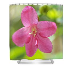 Passion For Flowers. Sweetie Shower Curtain by Jenny Rainbow