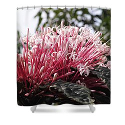 Passion For Pink Shower Curtain
