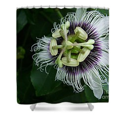 Passion Fruit Flower Shower Curtain by Mary Deal