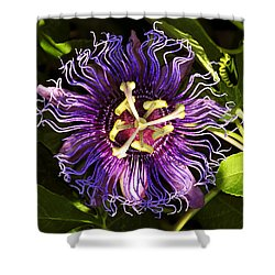 Passionflower Shower Curtain by David Lee Thompson