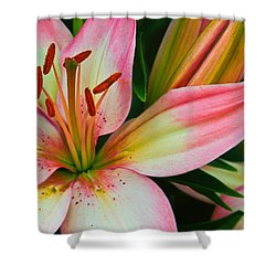 Shower Curtain featuring the photograph Pastel Pretty by Lynne Jenkins