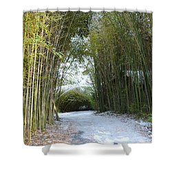 Path In Bamboo Field Shower Curtain by Renee Trenholm