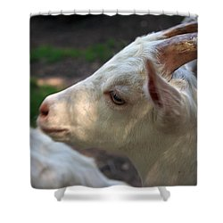 Shower Curtain featuring the photograph Patience Is A Virtue by Kay Novy