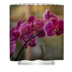 Peaceful Orchids Shower Curtain by Mike Reid