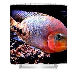Peacefull Fish Swim  Around  In Denmark Shower Curtain by Colette V Hera  Guggenheim