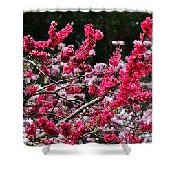 Peach Blossom Shower Curtain by Kaye Menner