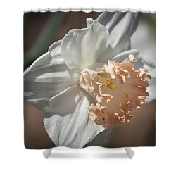 Peach Ruffle Daffodil 1 Shower Curtain by Teresa Mucha