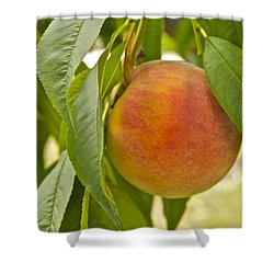 Peachy 2903 Shower Curtain by Michael Peychich