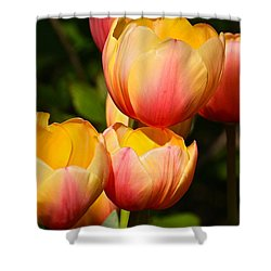 Peachy Tulips Shower Curtain by Byron Varvarigos