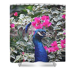 Shower Curtain featuring the photograph Peacock And Bouganvillas by Donna Smith