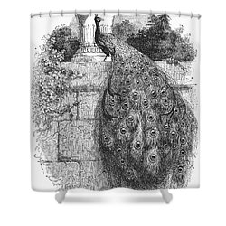 Peacock Shower Curtain by Granger