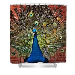 Peacock Tails Shower Curtain by Paul Ward