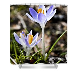 Peaking Spring Shower Curtain