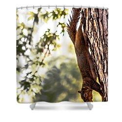 Peanut Run Shower Curtain by Robert Bales