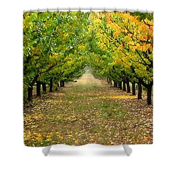 Shower Curtain featuring the photograph Pear Orchard by Katie Wing Vigil
